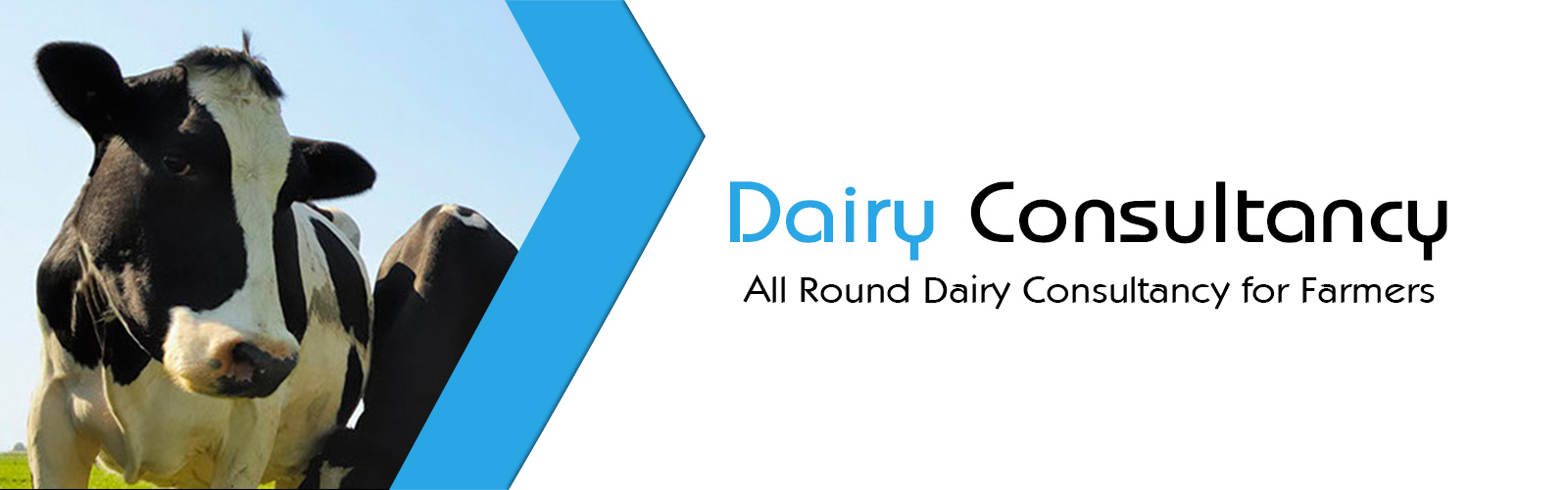 Dairy Consultancy